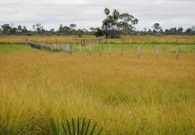 Fazenda em POCONÉ - MT, Pastagens p/ 30.000 cabeças