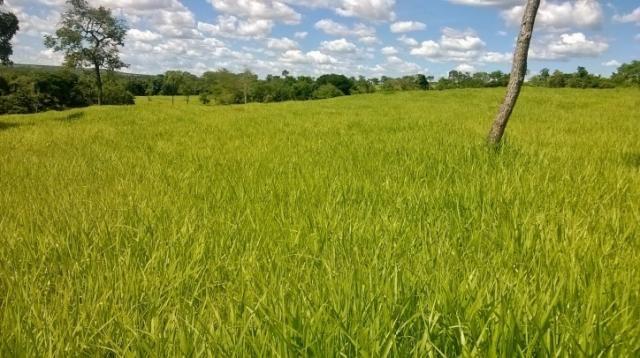 Fazenda em FORMOSA - GO, p/ Pecuária  - Foto 18