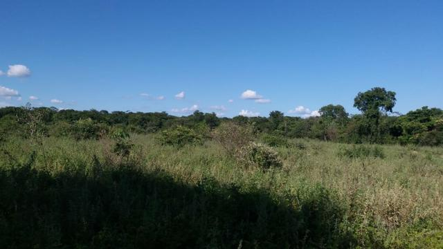 215A/Fazenda de 485 ha com outorga para irrigação às margens do Rio São Francisco - Foto 10
