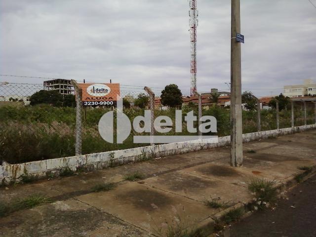 Terreno para alugar em Segismundo pereira, Uberlândia cod:221457 - Foto 3