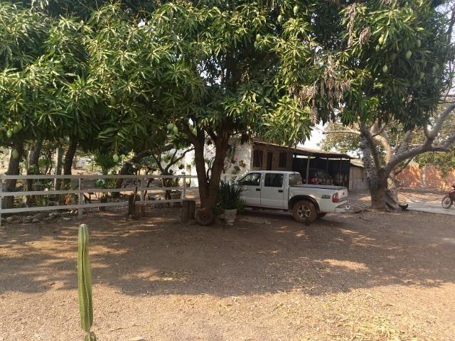 Chácara 2.5 ha, linha 16 cinturão verde - Foto 14