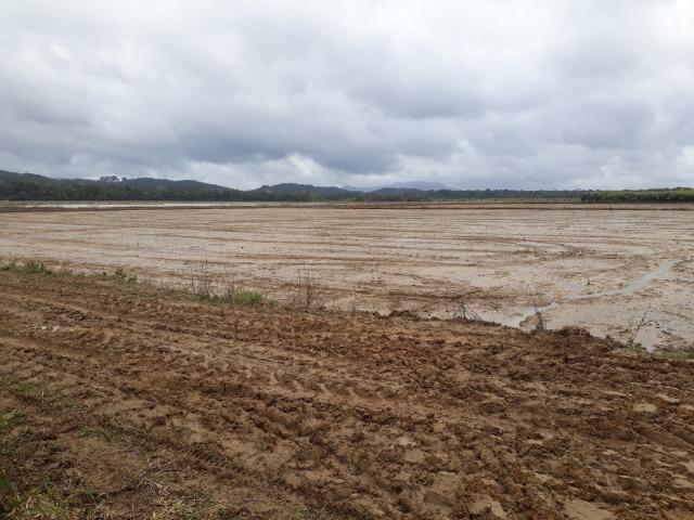 Fazenda Linda para Plantio de Arroz, Aceita parte Parcelado - Foto 15