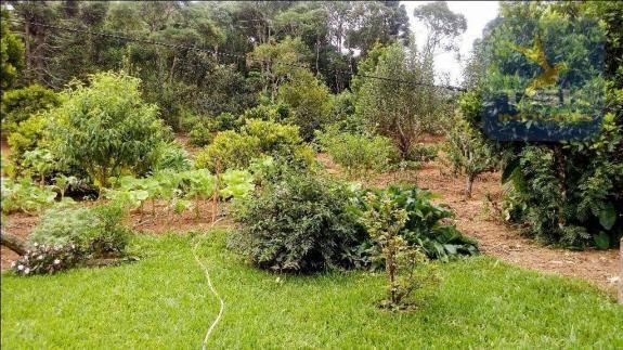 CH0266 - Chácara, 68.000 m² à venda por R$430.000. Agudos do Sul/PR. - Foto 16