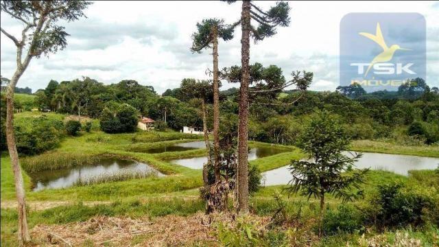 CH0266 - Chácara, 68.000 m² à venda por R$430.000. Agudos do Sul/PR. - Foto 3
