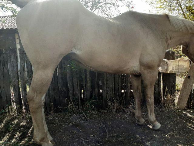 Zap *Cavalo grande e marcinho  para crianças  - Foto 4