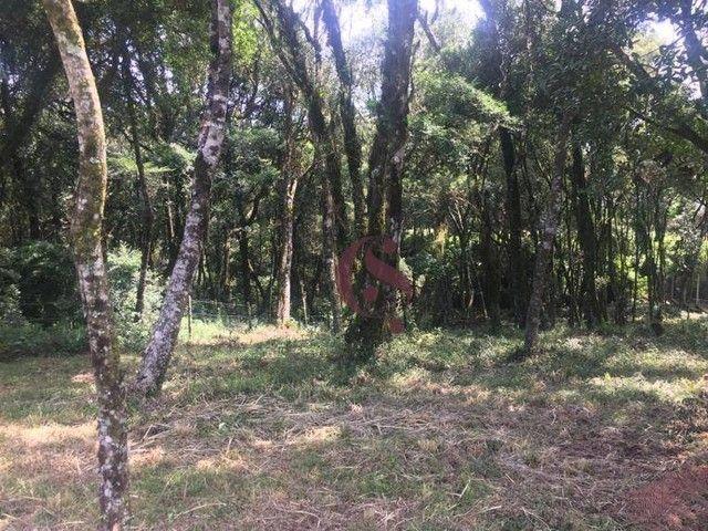 Terreno à venda no Jardim Mariana em Canela/RS - Foto 16