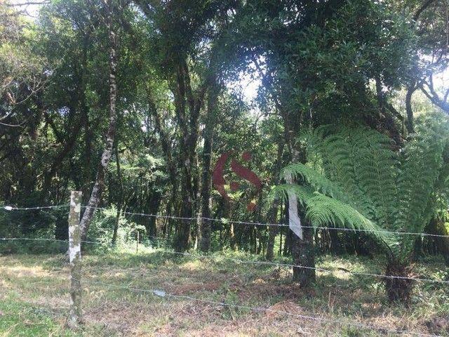 Terreno à venda no Jardim Mariana em Canela/RS - Foto 8
