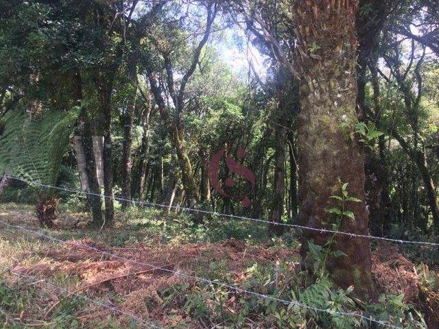 Terreno à venda no Jardim Mariana em Canela/RS - Foto 14