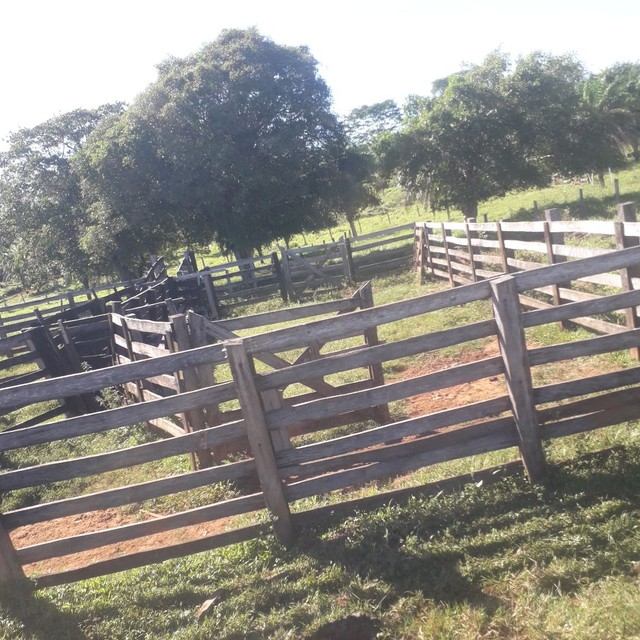 Sítio 118 hectares em coqueiral  - Foto 5