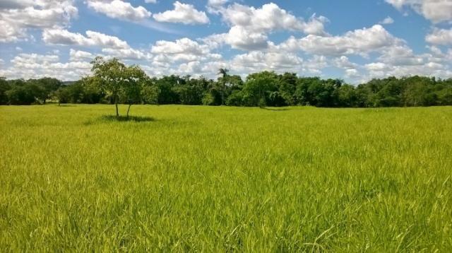 Fazenda em FORMOSA - GO, p/ Pecuária  - Foto 20