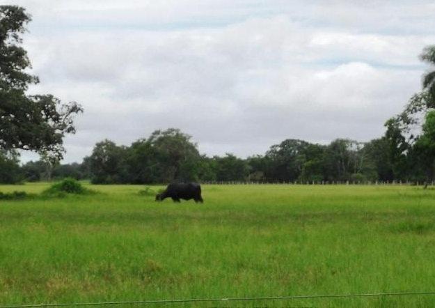 Fazenda em POCONÉ - MT, Pastagens p/ 30.000 cabeças - Foto 2