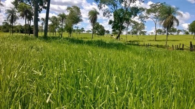 Fazenda em FORMOSA - GO, p/ Pecuária  - Foto 12