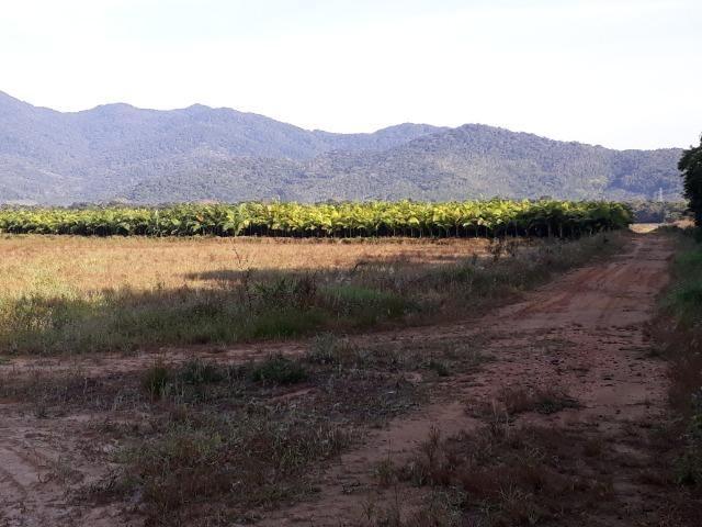 Fazenda Linda para Plantio de Arroz, Aceita parte Parcelado - Foto 6