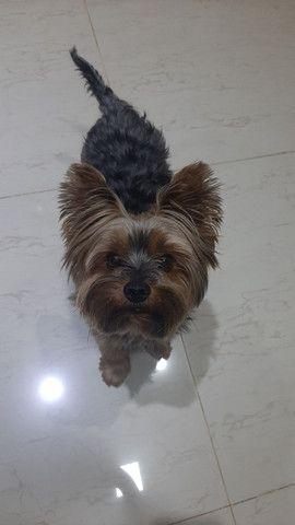 Cachorro procura