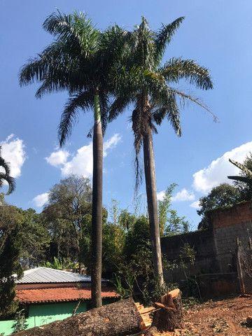 Palmeiras Imperial (Pampulha) - Foto 6