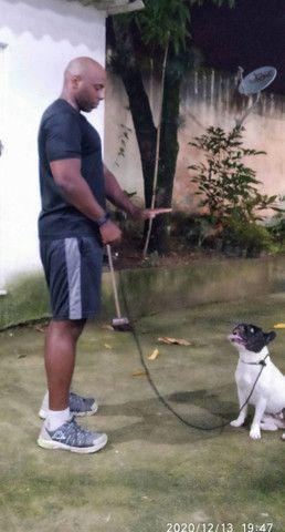 Adestramento Canino - Foto 6