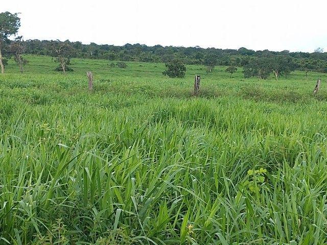 Fazenda a venda em Barra do Graça  - Foto 2