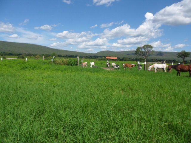 Fazenda entre Buritis-MG e Arinos-MG - 258 Alqueires