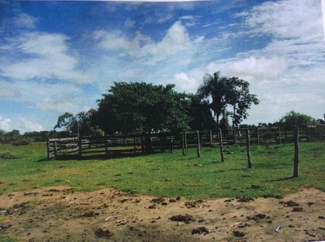 FAZENDA A VENDA NO PANTANAL MS (Pecuária) - Foto 2