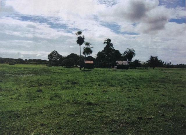 FAZENDA A VENDA NO PANTANAL MS (Pecuária) - Foto 3