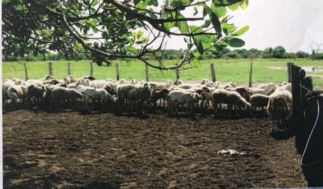 FAZENDA A VENDA NO PANTANAL MS (Pecuária) - Foto 4