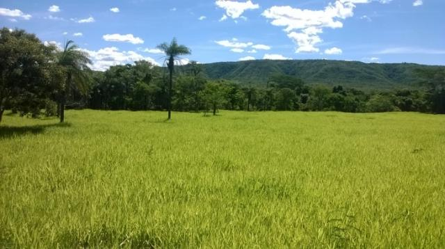 Fazenda em FORMOSA - GO, p/ Pecuária  - Foto 19
