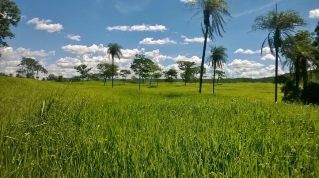 Fazenda em FORMOSA - GO, p/ Pecuária  - Foto 16