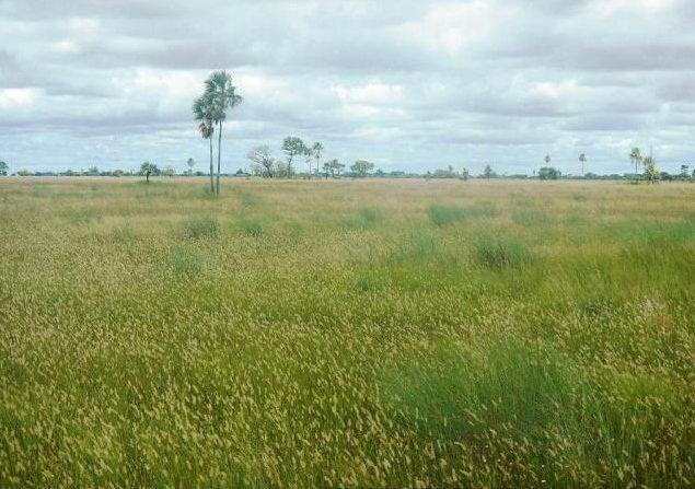 Fazenda em POCONÉ - MT, Pastagens p/ 30.000 cabeças - Foto 5