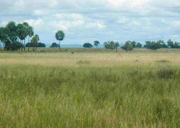 Fazenda em POCONÉ - MT, Pastagens p/ 30.000 cabeças - Foto 3