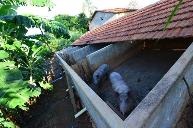 Chácara 1,5 alqueires município Morrinhos - Foto 14