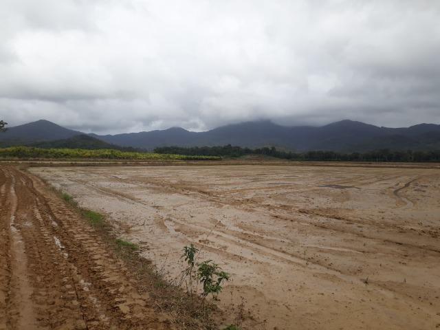 Fazenda Linda para Plantio de Arroz, Aceita parte Parcelado - Foto 9