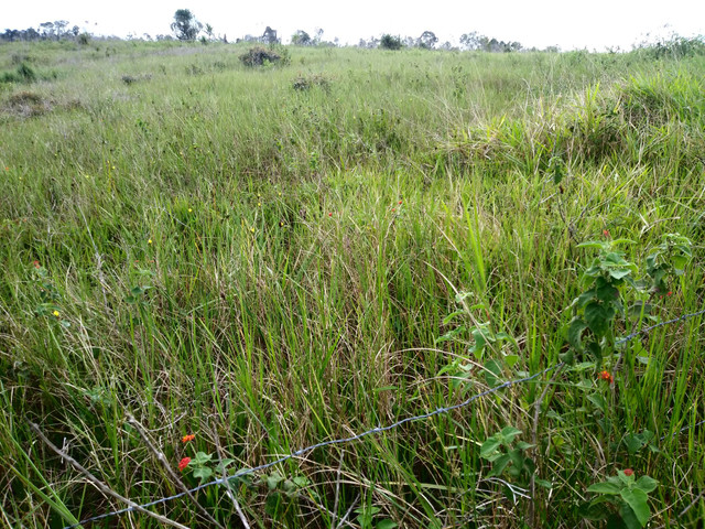 Arrendamento - Fazenda com 82 ha, Una-BA - Foto 17