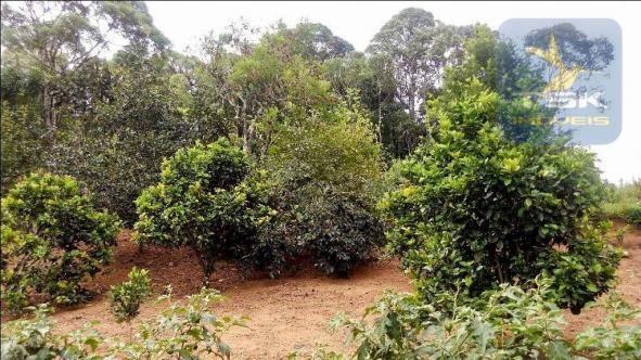 CH0266 - Chácara, 68.000 m² à venda por R$430.000. Agudos do Sul/PR. - Foto 14
