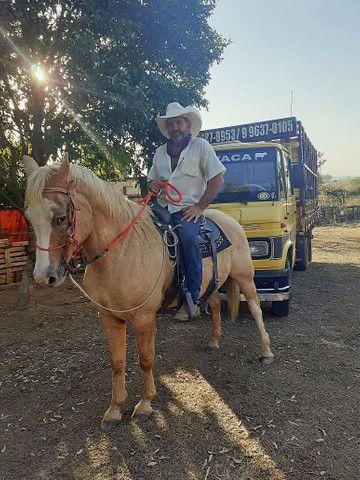 Zap *Cavalo grande e marcinho  para crianças