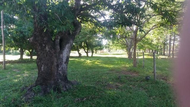 215A/Fazenda de 485 ha com outorga para irrigação às margens do Rio São Francisco - Foto 7
