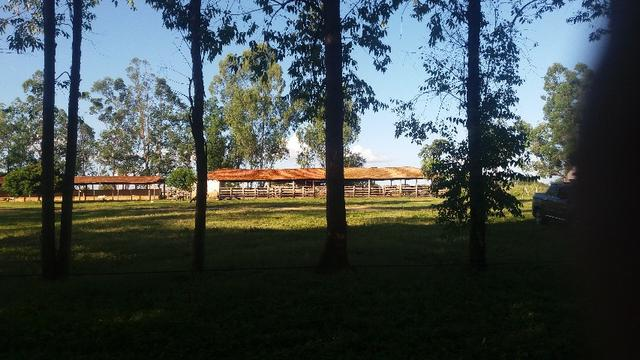 215A/Fazenda de 485 ha com outorga para irrigação às margens do Rio São Francisco - Foto 6