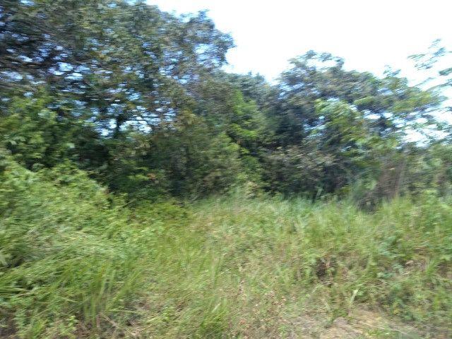 50 hectares na estrada de igarapé açu por 170 mil reais documentada - Foto 2