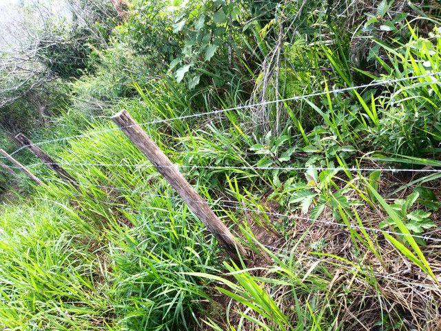 Arrendamento - Fazenda com 82 ha, Una-BA - Foto 14