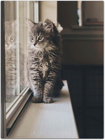 Maine Coon - Foto 4