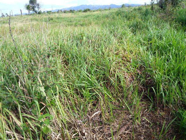 Arrendamento - Fazenda com 82 ha, Una-BA - Foto 18