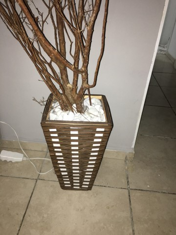 Planta seca  - Foto 2