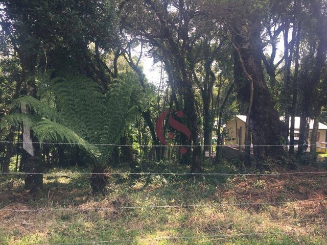 Terreno à venda no Jardim Mariana em Canela/RS - Foto 4