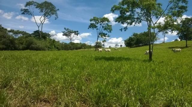 Fazenda em FORMOSA - GO, p/ Pecuária  - Foto 7