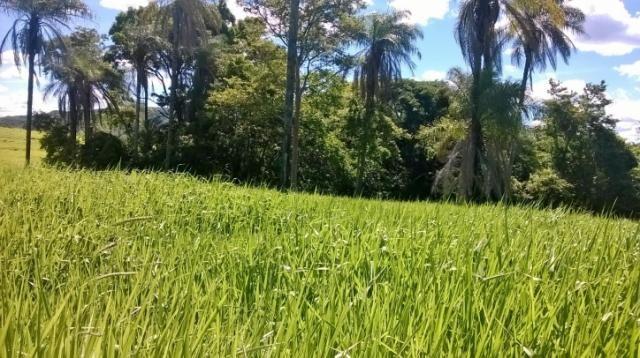 Fazenda em FORMOSA - GO, p/ Pecuária  - Foto 15
