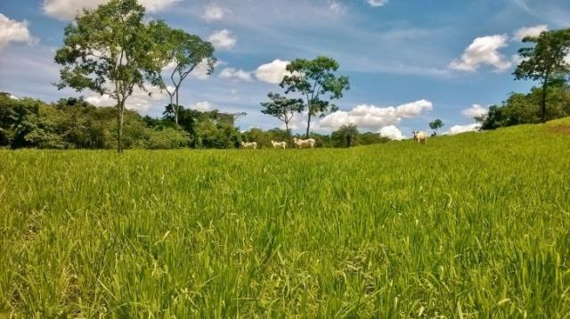 Fazenda em FORMOSA - GO, p/ Pecuária  - Foto 5