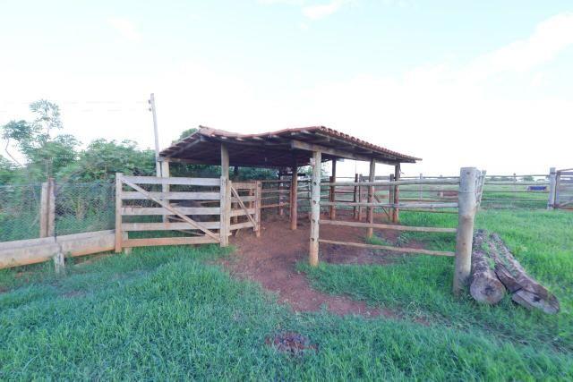 Chácara 1,5 alqueires município Morrinhos - Foto 10