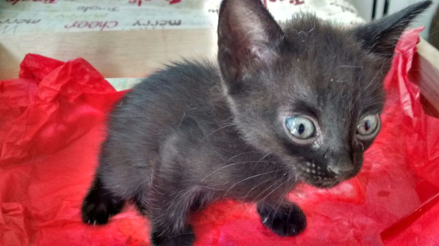 Doa-se gatinhos - Foto 3