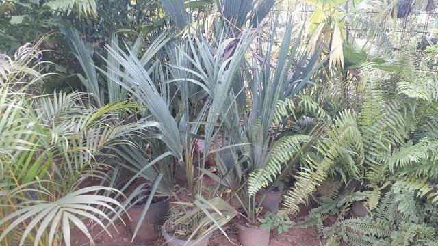Samuel plantas  - Foto 3