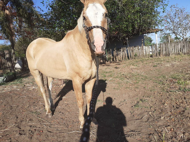 Zap *Cavalo grande e marcinho  para crianças  - Foto 5