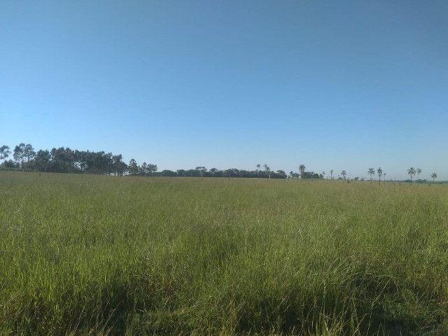 Crédito rural, para compras de chacara, sitio, fazenda, gado e etc - Foto 8